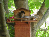 Tom Brown's Squirrel House gallery