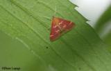 Raspberry pyrausta (Pyrausta signatalis), #5034