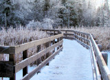 Jack Pine Boardwalk