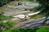 Around Solo (Surakarta) Indonesia