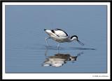 Birds 2008