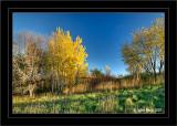 Autumn Colors (HDR)