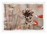 Autumn Bouquet (11-7-07)(0202)