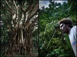 Tanna jungle, Tanna kastom