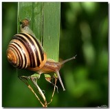 snails_turtles_snakes