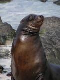 DSCN5803_Galapagos Sea Lion.JPG