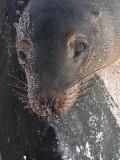 DSCN5825_Galapagos Sea Lion.JPG