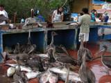 DSCN6121_Puerto Ayora Fish Market_Santa Cruz_1.JPG