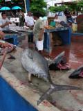 DSCN6127_Puerto Ayora Fish Market_Santa Cruz_2.JPG