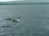 DSCN6712_Bottle-nosed Dolphins.JPG