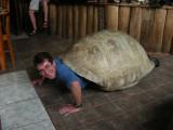 DSCN6184_male tortoise.JPG