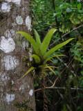 DSCN6206_lichen and bromeliad.JPG