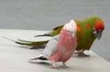 Macaw with ideas