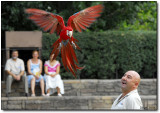 Fly parrot!