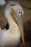Pelicano-2706.jpg