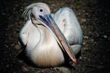 Pelicano-2709.jpg