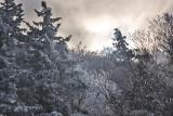 Ice Coatings: Mountain Lake