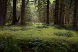 Hoh Rain Forest Floor