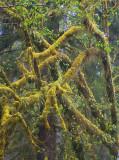Rain Forest Designs