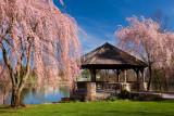 Spring Cherry Blooms-Virginia Tech