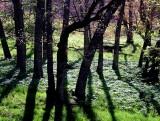 Appalachian Spring: Mountain Lake