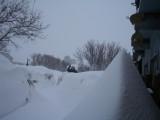 Frank peeking overa snow bank