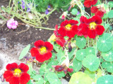 Flower garden at Garlands