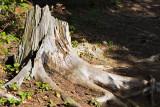 2T1U5992.jpg - Algonquin Provincial Park, ON, Canada