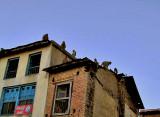 Monkeys on rooftops