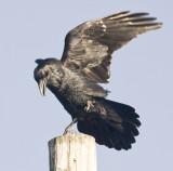 Landing on pole