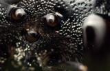 Bumblebee face 5683 crop (V70)