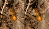 Macro cross-eye stereograms