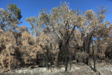 Fire-ravaged bush