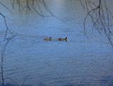 Lake at Brookland Valley