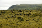 Moss over lava