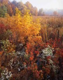 midwest_fall_color