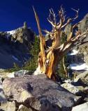 great_basin_national_park