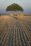 W - 2007-08-04- 0094 - Auvergne - Alain Trinckvel.jpg