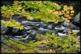 WM-2007-10-20--1448---Great-smoky---Alain-Trinckvel-3.jpg