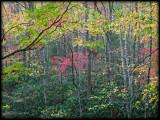 WM-2007-10-20--1261---Great-smoky---Alain-Trinckvel.jpg