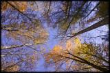 WM-2007-10-20--0271---Great-smoky---Alain-Trinckvel-4.jpg