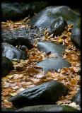 WM-2007-10-20--1321---Great-smoky---Alain-Trinckvel-2.jpg