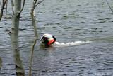 Timber Swims 05_29_09.jpg