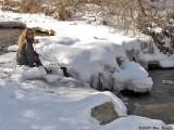 Wanda by the creek 12_20_09.jpg