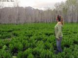 Wanda in spring 5_28_10.jpg