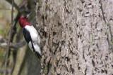 Oiseaux -  Pointe-Pelée 2009 - Birds