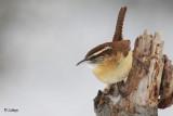 Oiseaux - 2009 - Birds