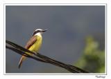 Birds of Costa Rica - 2010 - Oiseaux