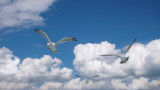 Matsushima Islands Seagulls October 2007