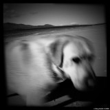 Holga the dog